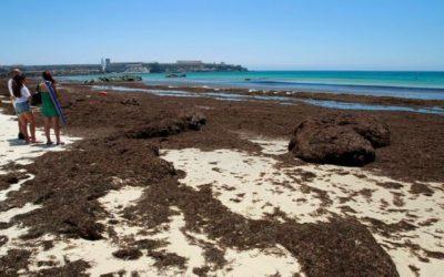 La Junta realizará un mapa del alga asiática para decidir dónde es urgente retirarla
